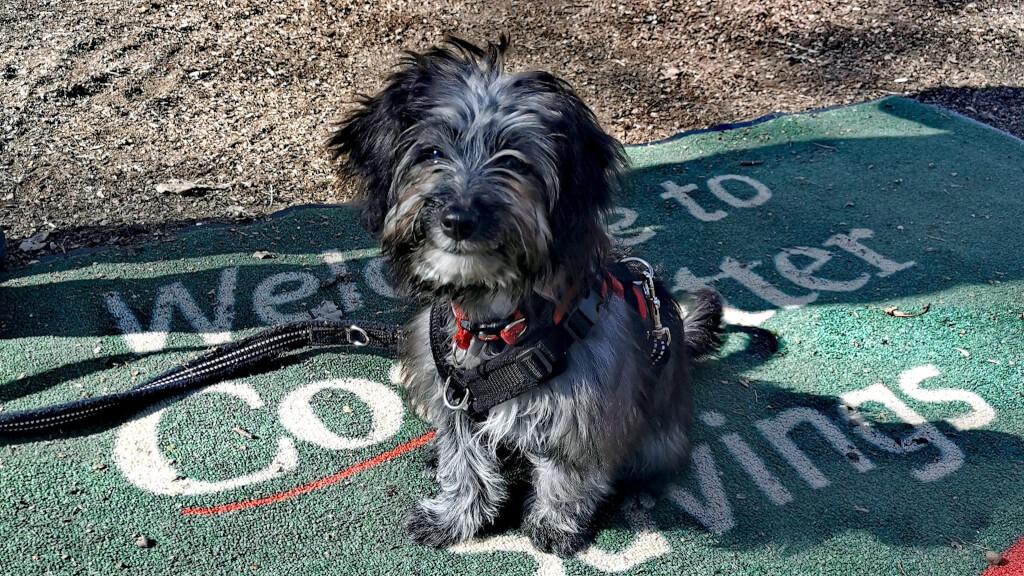 Puppy Starter Course