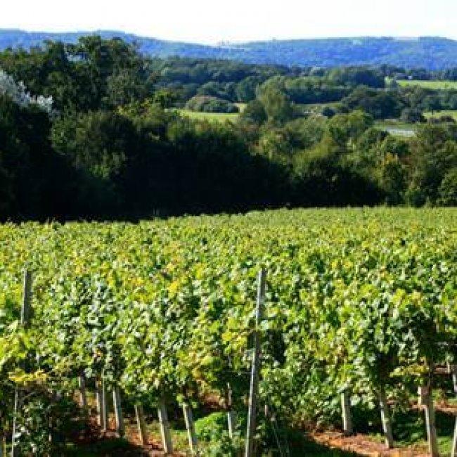 Stopham Vineyard