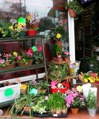 Buds N Blooms Florist